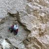 Le Tichodrome, oiseau mythique des falaises, très coloré et pourtant si discret.<br /> L'oiseau papillon !