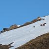 Comme souvent en ski, pas de réflex sous la main, 105mm.<br /> RN Baillettaz à Val d'Isère.