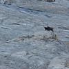 La mère conduit son petit dans les barres, pied alpin nécessaire