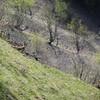 Le printemps arrive ainsi que le retour de la verdure et de conditions plus clémentes