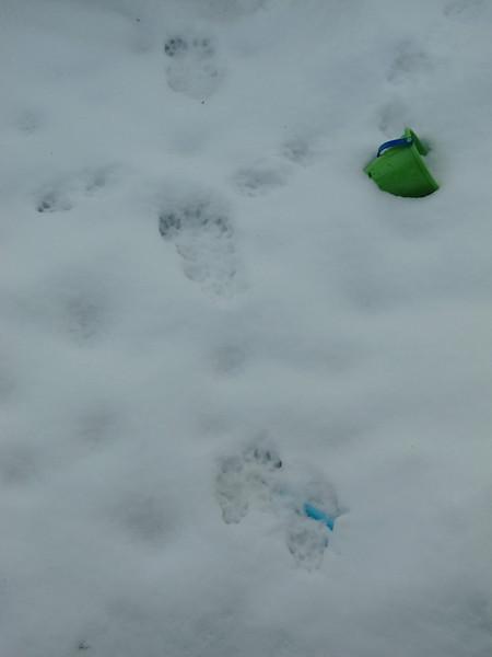 Traces de fouine dans la neige de la nuit.