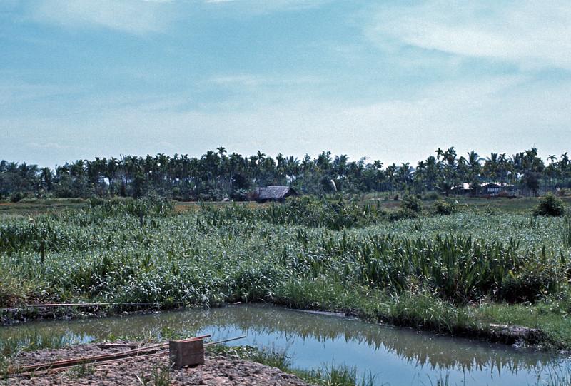 Landscape near Dau Tieng.  © 1971, MJ Roche.