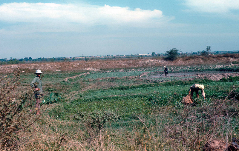 Cultivating crops off Route 1 near Saigon, March, 1971.