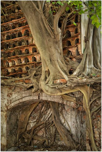 Pidgeon Housing Within Tree Roots