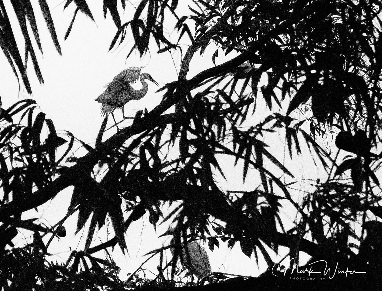 At 5:00 in the park, these birds flock together to spend the night, Ca Mau