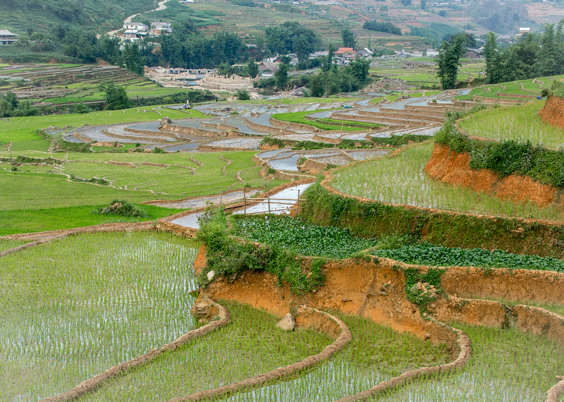Sapa, Vietnam: in this mountainous area, farmers plant and harvest two crops of rice a year. This rice has just been planted.