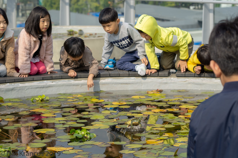 Children and Turtles, Downtown Seoul, South Korea