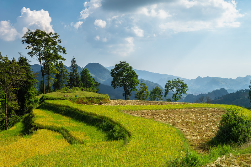 Terraced Rice Fields Above Bac Ha