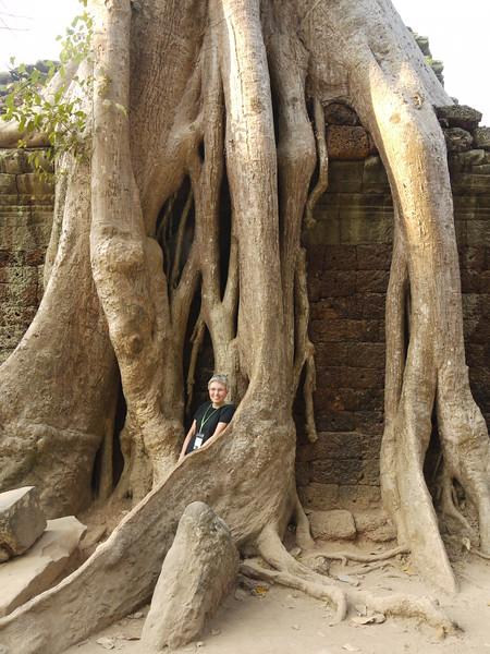 SAB among the vines at Angkor Thom