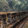 Angkor Wat monkeys.