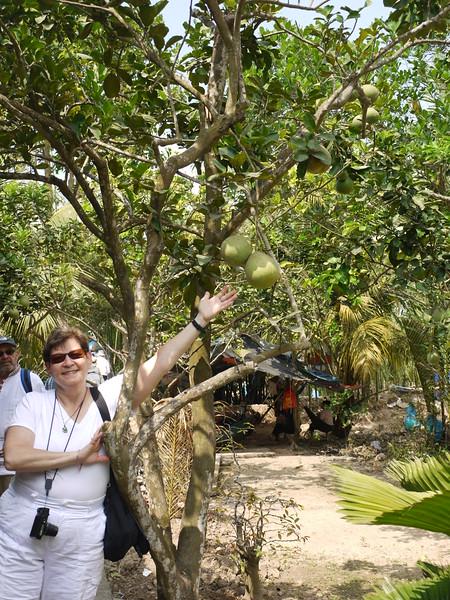 Jeannie with some kind of fruit.  Jackfruit?
