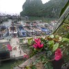 Organized mayhem:  tourist boats take turns backing into the wharf for tourists who have already gone through the cave.