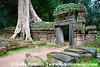 Ta Prohm is a Buddist temple that the forest has embraced.