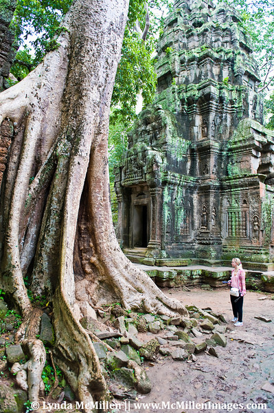 Some of the Spung trees at Ta Prohm are over 400 years old.