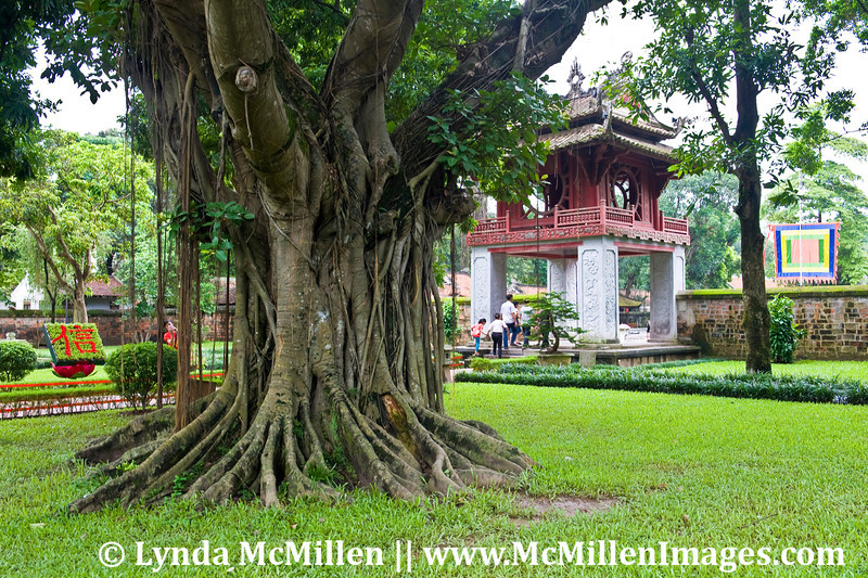 Ancient trees have provided shade for thousands of students over a millennia.