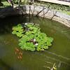 Koi ponds all around the garden area