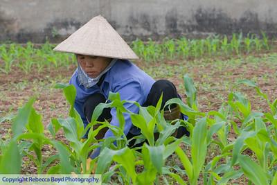 A farmer working in her rice fields in Vietnam