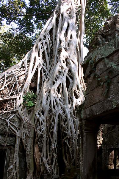 174 Prah Khan, Angkor
