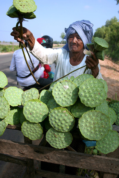 Selling lotus pods, Cambodia