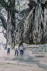 Banyan, Da Nang