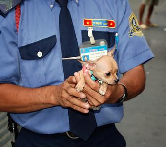 Cute dog in Saigon