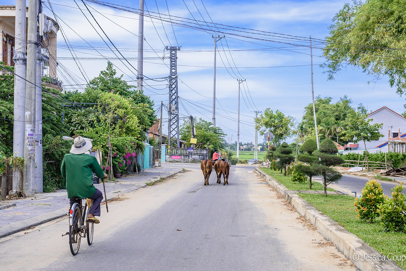 Following the Cattle Home