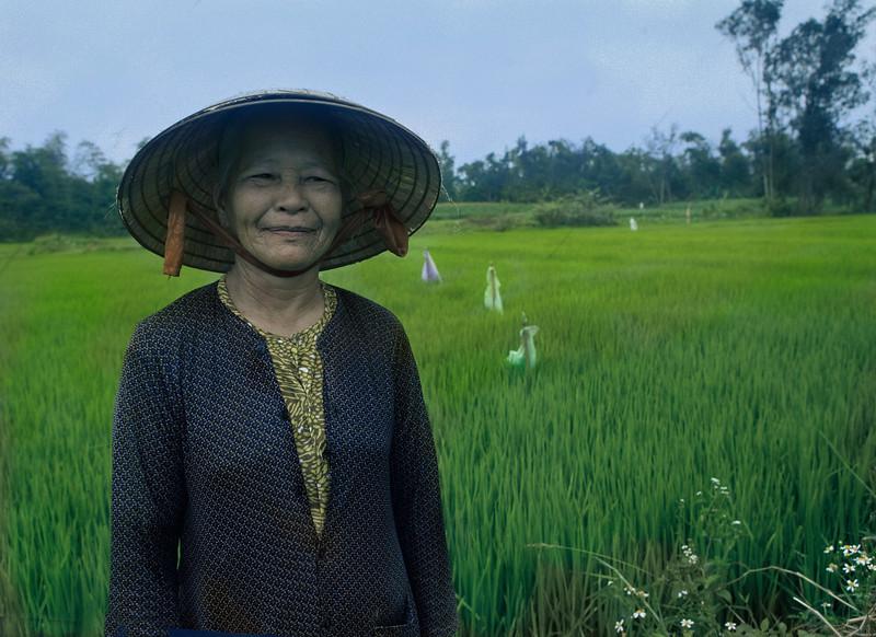 Peasant Woman, Rice Field, Hoi An, Vietnam