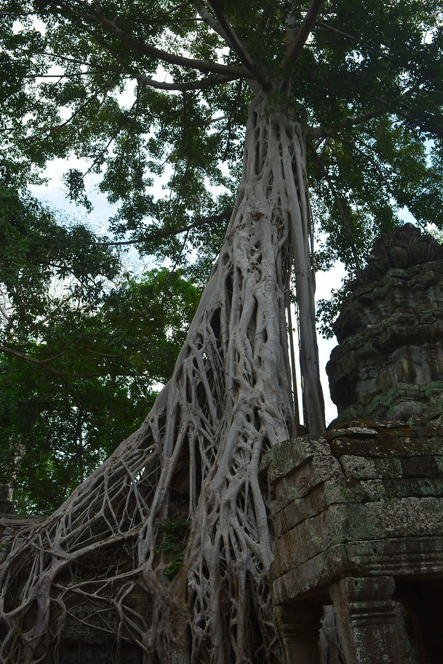 Tree growing on temple