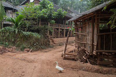 We crossed a suspension bridge over the river to access this village. At first we couldn't find the people so we parked the bikes and wandered. Suoi Pha Village, Moc Chau, Thai minority