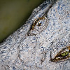SAIGON ZOO - Croc Eye