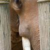 SAIGON ZOO- Framed Elephant