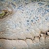 SAIGON ZOO - Croc Smile 2