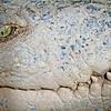 SAIGON ZOO - Croc Smile 2