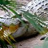 SAIGON ZOO- Crocodile Smile