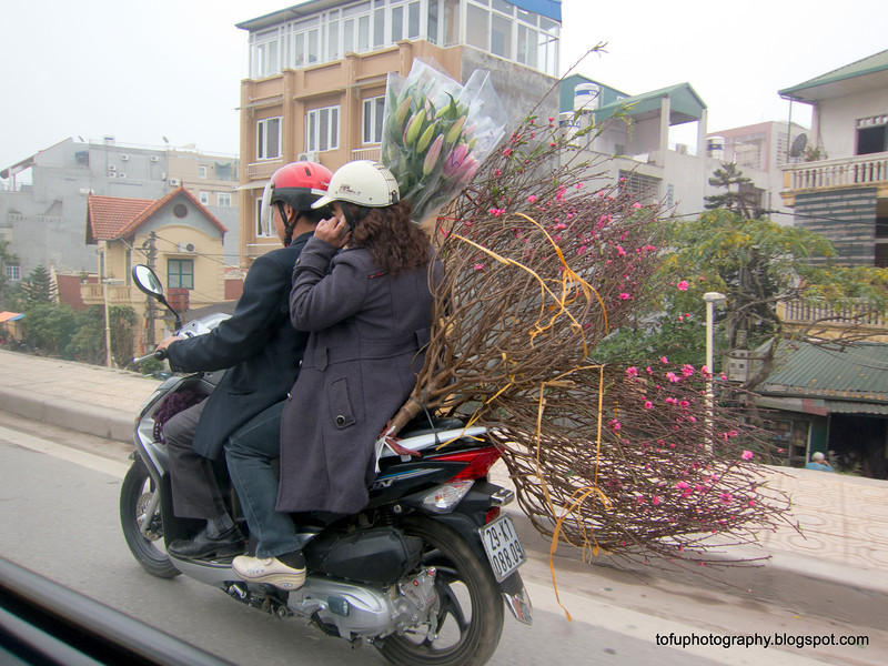 On a motorbike with tree branches in Hanoi, Vietnam in January 2012