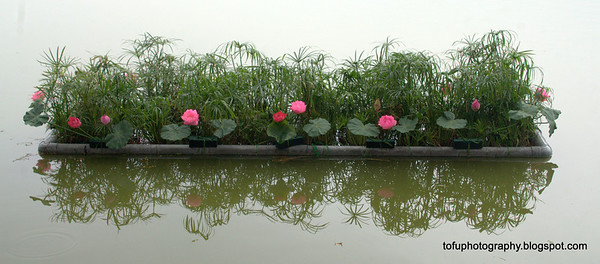 Flowers at the Hoàn Kiếm Lake in Hanoi, Vietnam in January 2012