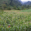 A field of vegetables? Where's Doc? If you build he will stand in it? Mai Chau region Vietnam