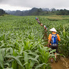 Corn and conical hats. Mai Chau Region Vietnam