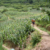 On the trail between Sa Linh and Pa Co, North Vietnam.