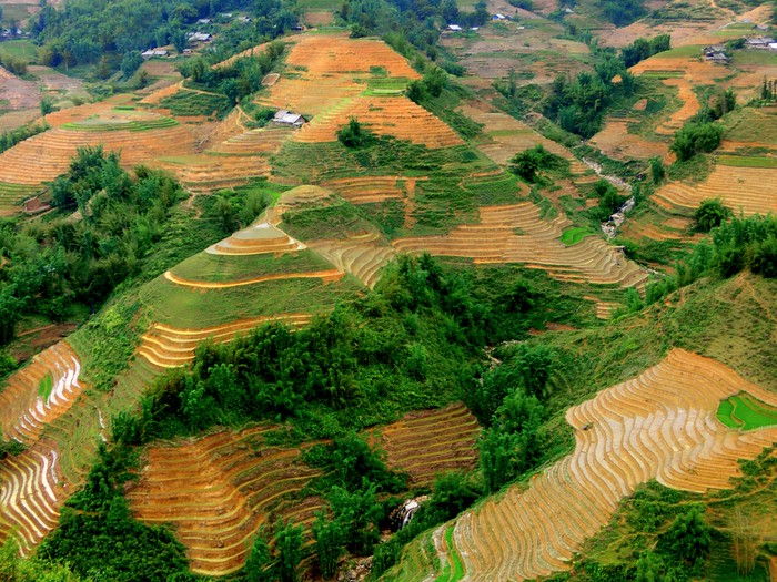 The rice terraces in Sapa, Vietnam during the wet season.