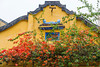 Bougainvillea flowers and Vietnamese architecture in Hoi An, Vietnam, Asia.