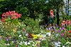 Flower gardens on Ham Rong Mountain, Sapa, Vietnam, Asia.