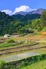 Terraced rice fields on the hillside at Ta Phin Village near Sapa, Vietnam, Asia.