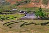 Terraced rice fields on the hillside with Ta Van village in the valley near Sapa, Vietnam, Asia.