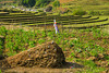 A burial mound in the countryside in Ta Van village near Sapa, Vietnam, Asia.