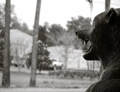 spirit of the bear.