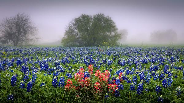 Blooming Texas