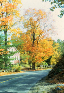 Fall foliage in Connecticut.
