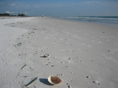 Sarasota shores, FL