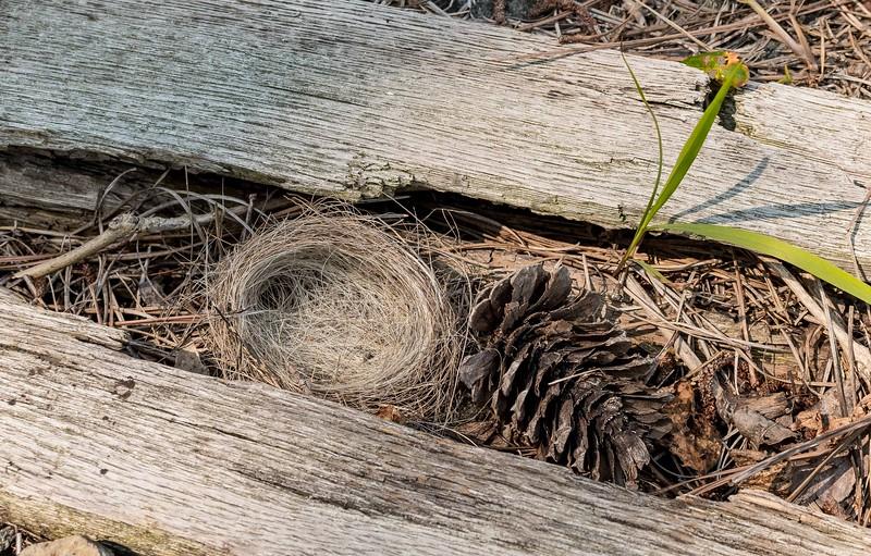 Nest between RR Ties
